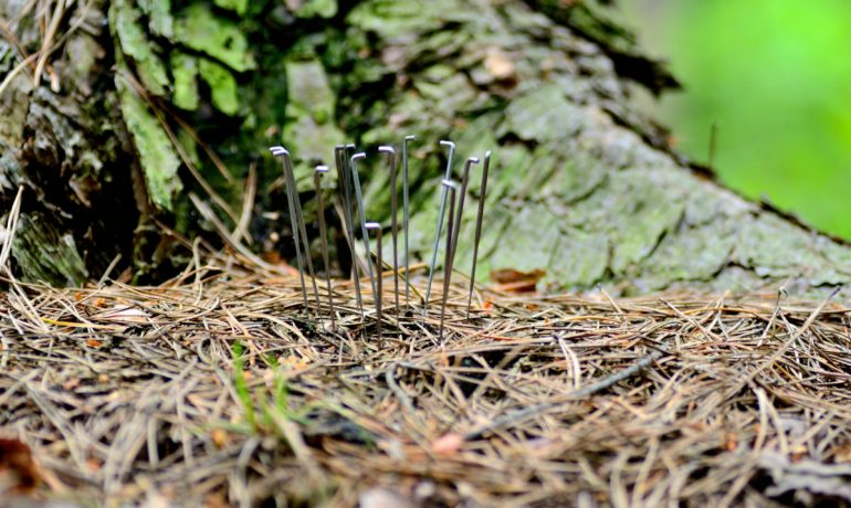 Felting needles in a deep forest near the place we live