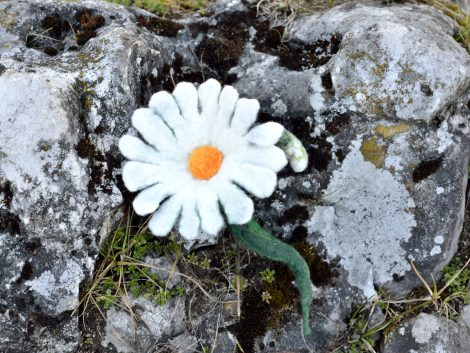 Felted daisy brooch