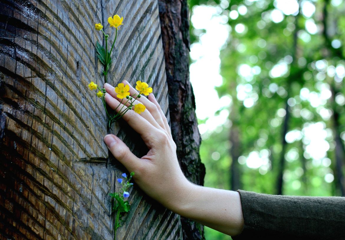 Hand with flowers on a trunk of a wounded tree